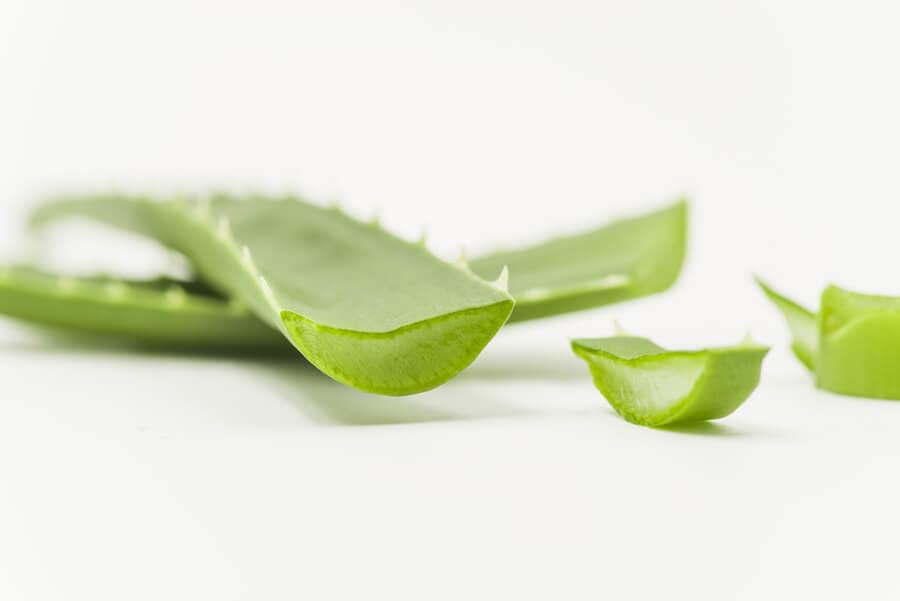 Jak zpracovat listy aloe vera?