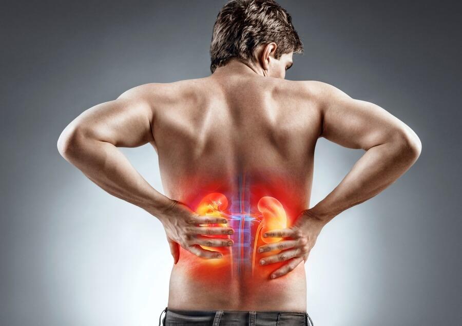 Ledviny jsou párový orgán a sídlí podél páteře.