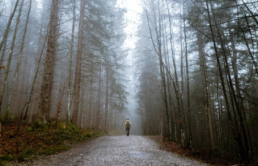 I procházka v přírodě má pozitivní dopad na naši imunitu
